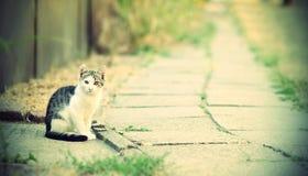 美丽的小猫在路,葡萄酒旁边坐 库存照片