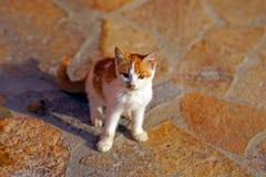 美丽的小猫看往照相机 免版税库存图片