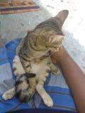 美丽的小猫 库存图片