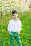 美丽的小男孩在一个开花的庭院里在春天 免版税图库摄影