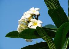 美丽的小白花 免版税库存照片