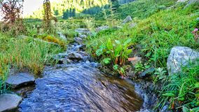 美丽的小的河 库存图片