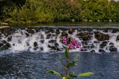 美丽的小的瀑布 图库摄影