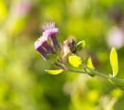 美丽的小的花本质上 库存照片