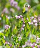 美丽的小的花本质上 图库摄影