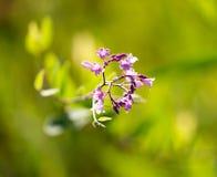 美丽的小的花本质上 库存图片