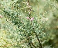 美丽的小的花本质上 免版税库存照片