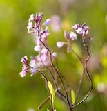 美丽的小的花本质上 免版税库存图片