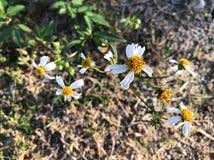 美丽的小的草花在早晨 免版税库存照片