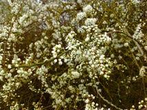 美丽的小花年轻叶子和绿色自然背景 库存照片