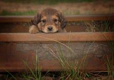 美丽的小逗人喜爱的哀伤的小狗画象  库存图片