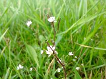 美丽的小野花和绿色自然背景 库存照片