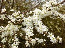 美丽的小野花和绿色自然背景 图库摄影