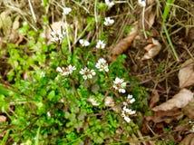 美丽的小野花和绿色自然背景 免版税库存图片