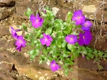 美丽的小紫色花年轻叶子和绿色自然背景 免版税库存图片
