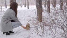 美丽的少妇在冬天公园喂养一只灰鼠 慢动作 她在冬天是愉快的 微笑 日霜1月天然公园多雪的结构树冬天 影视素材
