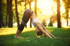 美丽的少妇实践瑜伽asana向下的狗在公园在日落 库存图片