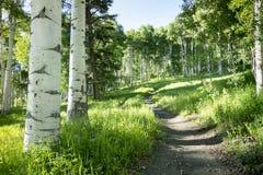 美丽的山供徒步旅行的小道通过Vail科罗拉多亚斯本树  免版税库存照片