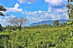 美丽的山和森林 库存图片