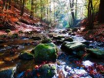 美丽的山小河在秋季山毛榉森林里 库存照片