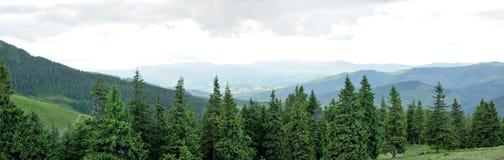 美丽的山森林全景  图库摄影