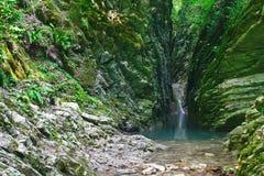 美丽的峡谷长满与青苔和常春藤与镇静河和小瀑布 库存图片