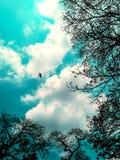 在天空的树 免版税库存照片