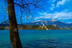 美丽的布莱德湖,斯洛文尼亚 图库摄影