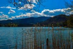 美丽的布莱德湖,斯洛文尼亚 免版税库存照片