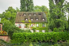 美丽的常春藤和藤在法国盖了在家 库存照片
