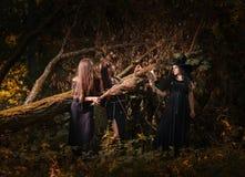 美丽的年轻巫婆在黑暗的森林里 免版税库存照片