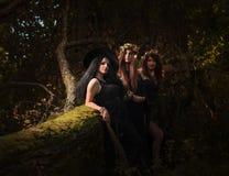 美丽的年轻巫婆在黑暗的森林里 图库摄影