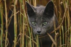 美丽的幼小恼怒的看的猫的面孔特写镜头画象喂 库存图片