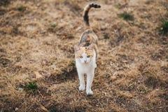 美丽的幼小愉快的猫的面孔画象  库存照片