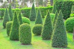 美丽的庭院公园 库存图片