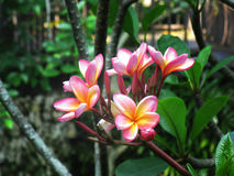 美丽的庭院兰花 免版税库存照片