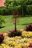美丽的庭院和植物,奥阿胡岛,夏威夷 免版税库存照片