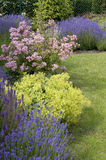 美丽的庭院在春天。 库存图片