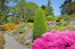 美丽的庭院在春天 免版税库存图片