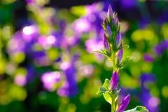 美丽的庭院花-晚上对比 库存图片