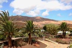 美丽的庭院 加那利群岛西班牙 图库摄影