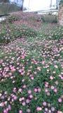 美丽的庭院 免版税图库摄影