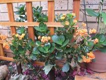 美丽的庭院001 Kambas 图库摄影