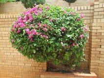 美丽的庭院003 Kambas 库存图片