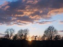 美丽的开放秋天领域Dedham太阳集合轻的树枝s 免版税库存图片
