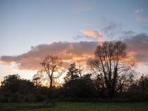美丽的开放秋天领域Dedham太阳集合轻的树枝s 库存照片