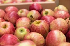 美丽的开胃果子红色背景用在a.c.的红色苹果 图库摄影