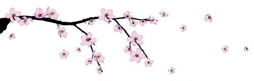 美丽的开花分行樱桃 免版税库存照片