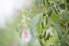 美丽的开花植物 库存照片