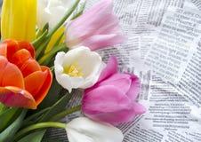美丽的开花的五颜六色的郁金香在文本小片拼贴画开花  背景背景卡片设计花卉例证 背景蓝色云彩调遣草绿色本质天空空白小束 春天背景与 免版税库存照片